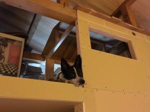 三角屋根の犬小屋